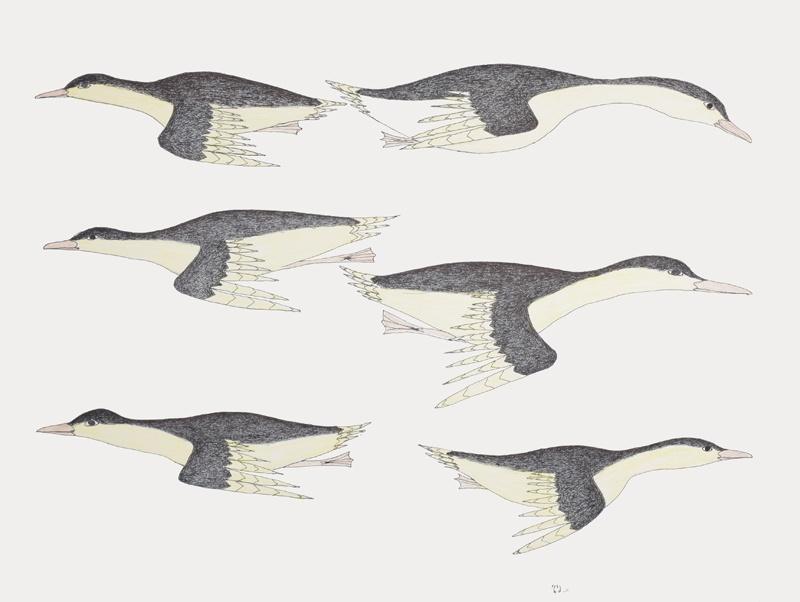 Kakulu Saggiaktok Inuit Graphite, colored pencil and ink 20 x 25 600 Eider Ducks input original drawing cape dorset