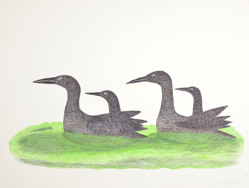 Ohotaq Mikkigak Inuit Graphite, colored pencil and ink 20 x 25 600 loon family inuit print cape dorset