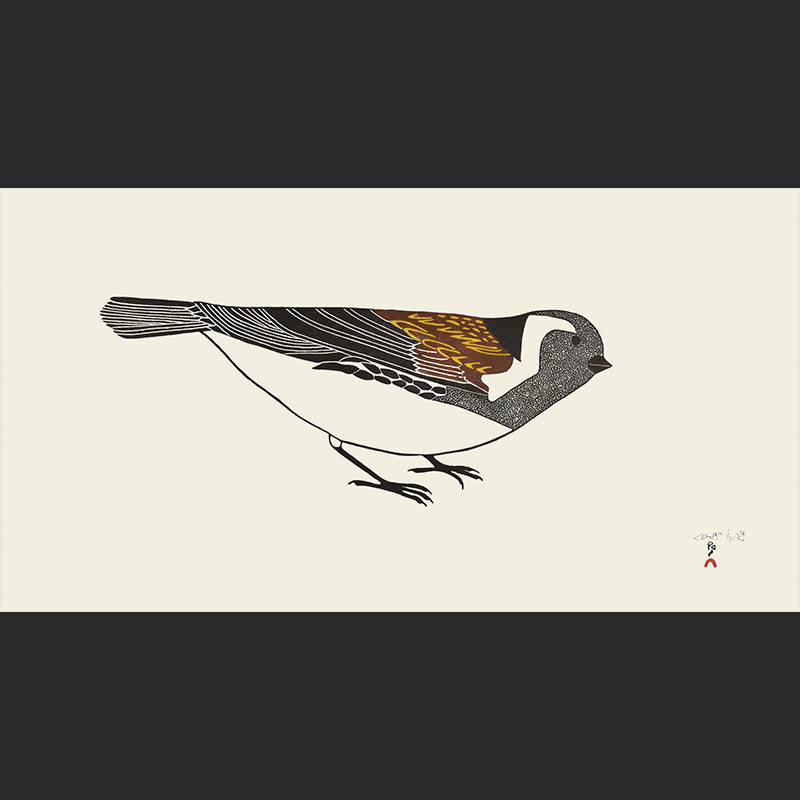 Pauojoungie Saggiai Timmiaralaaq Little Bird cape dorset print collection 2016 360