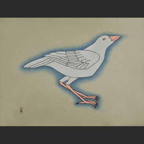 "white raven Qavavau Manumie White Raven Cape Dorset Print Collection 2015 Stonecut & Stencil 18 ½"" x 24"" $700"